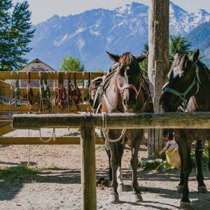 CopperCayuse_Ranch2_1200-300x300