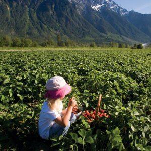 Pemberton Farm Tour & Other Agri-Tourism