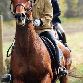 horseback8